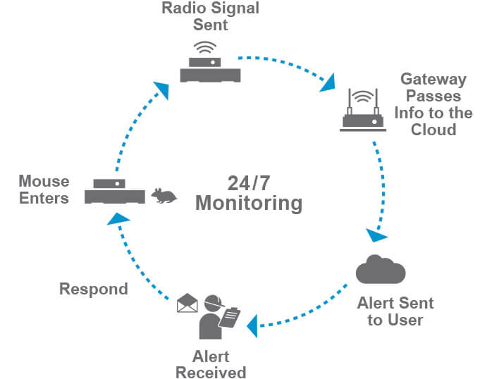Bayer Rodent Monitoring System 24/7 Chart